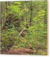 Rainforest Green Everywhere Wood Print