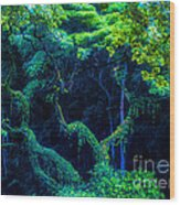 Rainforest In Waimea Valley Wood Print by Lisa Cortez
