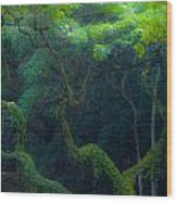 Rainforest In Waimea Valley Too Wood Print