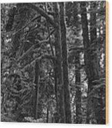 Rainforest Wood Print
