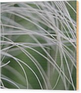 Rainforest Palm Tree Leaf Close Up  Wood Print