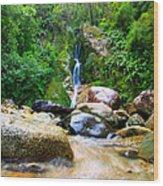 Rainforest Stream New Zealand Wood Print