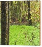 Rainforest Wetland Wildernis Of West Coast Bc Wood Print