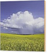Rainstorm Over Canola Field Crop Wood Print by Ken Gillespie