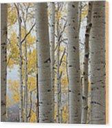 Rainy Day Aspen  Wood Print
