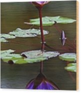 Rainy Day Lotus Flower Reflections IIi Wood Print