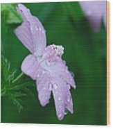 Rainy Day Mallow Wood Print