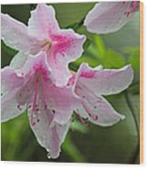 Rainy Day Series - Pink On Pink Azaleas Wood Print