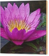 Rainy Day Water Lily Reflections II Wood Print
