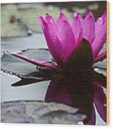Rainy Day Water Lily Reflections 6 Wood Print