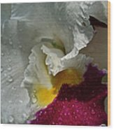 Rainy Orchid Wood Print