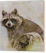 Rakish Raccoon  Wood Print