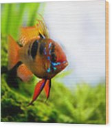 Ram Fish Wood Print
