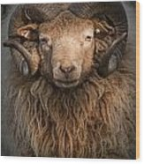Ram Portrait Wood Print