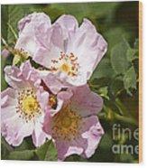 Rambling Rose 3 Wood Print