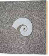Rams' Horm Shell Wood Print
