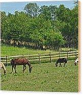 Ranch Daisies Wood Print