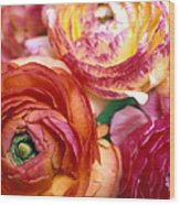 Ranunculus Close-up Wood Print