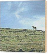 Rapa Nui Horse Wood Print