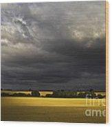Rapefield Under Dark Sky Wood Print