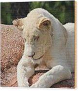 Rare Female White Lion Wood Print