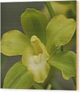 Rare Green Orchid Wood Print