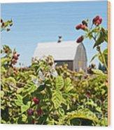 Raspberry Farm Wood Print
