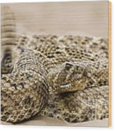 Rattlesnake 1 Wood Print