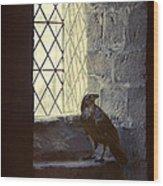 Raven By Window Wood Print