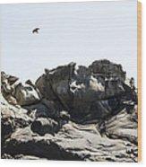 Raven Flying Over Tafoni Wood Print