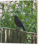 Raven In The Wild Wood Print