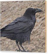 Raven Perched On A Ledge Wood Print