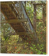Ravine State Gardens Palatka Florida Wood Print