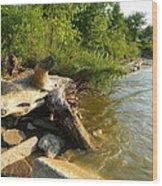 Raw Lake Erie Shore Wood Print