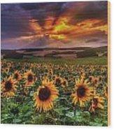 Rays Of Sunflowers Wood Print
