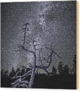 Reaching For The Stars Wood Print