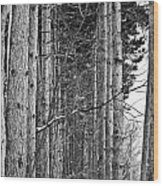Reaching Pines Wood Print