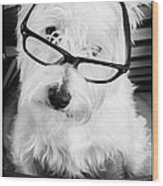 Really Portait Of A Westie Wearing Glasses Wood Print