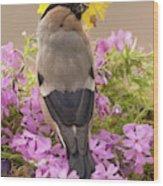 Rear View Of Female Bullfinch Standing Wood Print