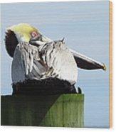 Rear View Pelican Wood Print