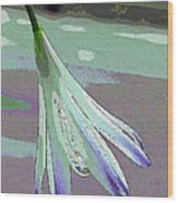 Reclining Lily Abstract Wood Print