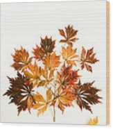 Reconstructed Full Moon Maple Wood Print