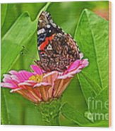 Red Admiral Butterfly And Zinnia Flower Wood Print