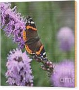 Red Admiral Butterfly On A Blazing Star Wood Print