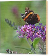 Red Admiral Butterfly On Butterfly Bush Wood Print