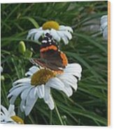 Red Admiral On A Daisy Wood Print
