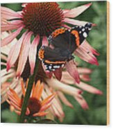 Red Admiral On Coneflower Wood Print
