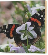 Red Admiral  Wood Print