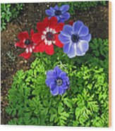 Red And Blue Anemones Wood Print