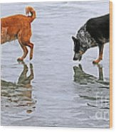Red And Blue Heelers Wood Print